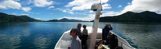 Pelorus Mail Boat: A beautiful day in Pelorus Sound