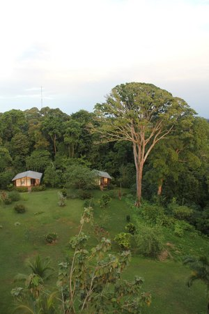 Tranquilo Bay Eco Adventure Lodge: View of cabins from the birding tower