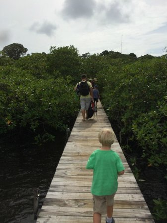 Tranquilo Bay Eco Adventure Lodge: Entering Tranquilo Bay through the mangroves