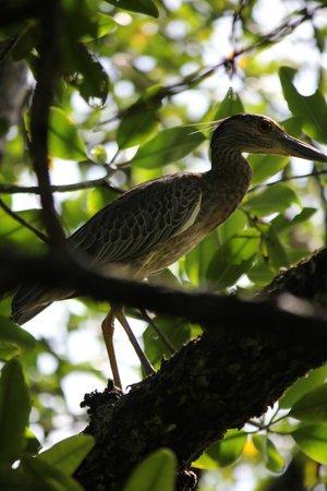 Tranquilo Bay Eco Adventure Lodge: So many birds!