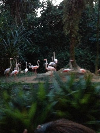 Night Safari : フラミンゴ