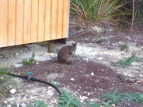 Gowrie Park Wilderness Village: Local wildlife