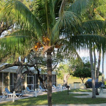 Islander Resort: Coconut Palms