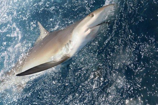 Linda D Sportfishing: Shark Bite