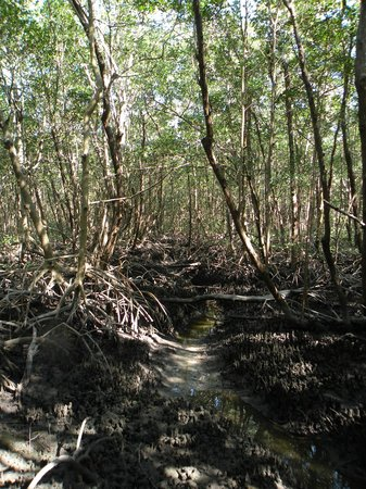 Everglades Backcountry Experience with Capt. Rodney Raffield : Sandfly Island Mangroves