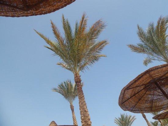 Lilly Land Beach Club Hotel : 432431