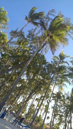 Vista Sol Punta Cana : Пляж во сторой половине дня