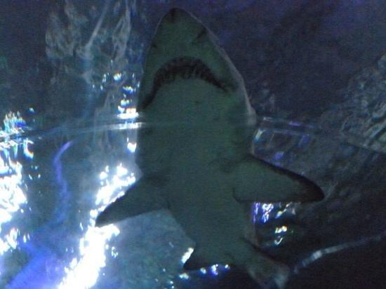 Blue Planet Aquarium: Wow!