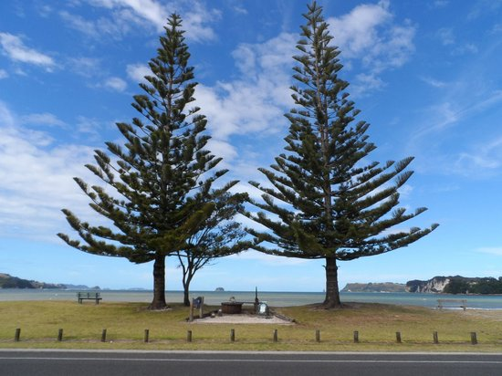 Oceanside Motel Whitianga: Iconic Norfolk Pines