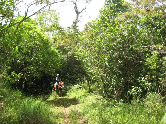 The Stable Arenal (El Establo): riding through the beautiful area