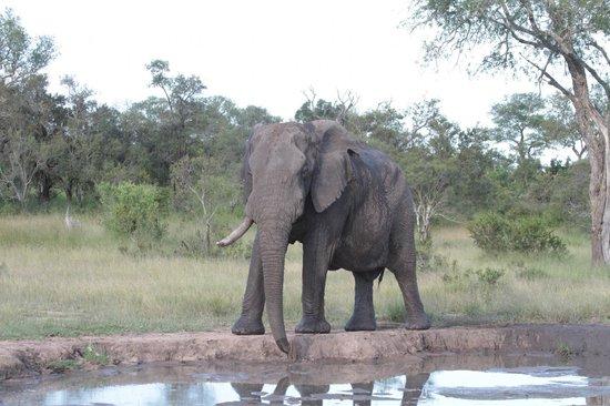 Tintswalo Safari Lodge : vue de la chambre