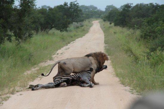 Tintswalo Safari Lodge : sur le chemin des safaris