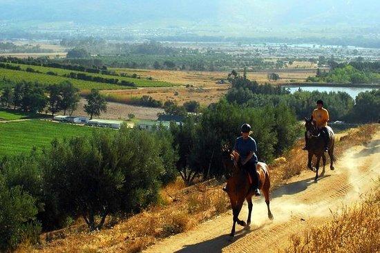 Wellington, Afrika Selatan: Exploring the wine-lands on horseback