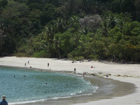 Jungle Creek: Manuel Antonio Beach