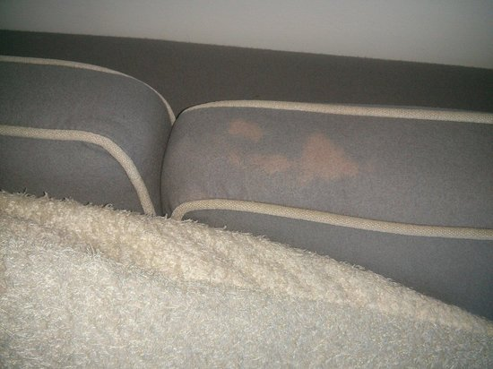 Amora Hotel Jamison Sydney : Stained out of date couch in park suite