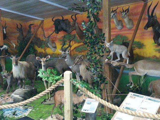 Tropical Ocean Cafe: kids loved the safari area
