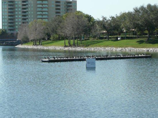 Crane's Roost Park : Birds!  Birds!  Birds!
