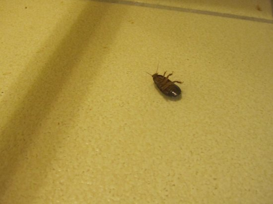 International Palms Resort & Conference Center: Sizeable bug in our room in the A.M.