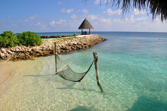Vivanta by Taj Coral Reef Maldives: área comum