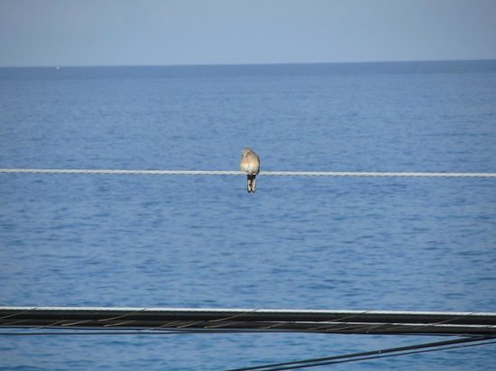 Kona Sugar Shack: Bird on wire
