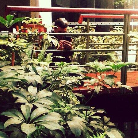 Eco Inn Cusco: Zona de Desayuno