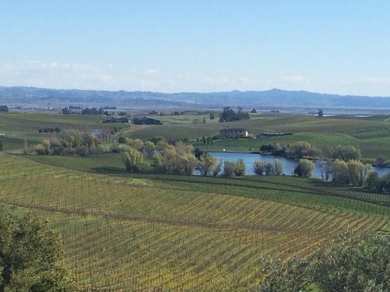 Artesa Vineyards & Winery: Nice views from the winery