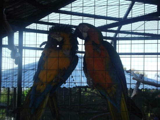 Toucan Rescue Ranch: Parrots