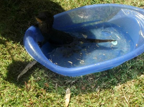 Toucan Rescue Ranch: Baby otter