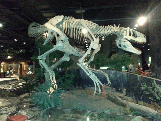 McWane Science Center: Dinosaur exhibit was fun...had a dig site for kids : )