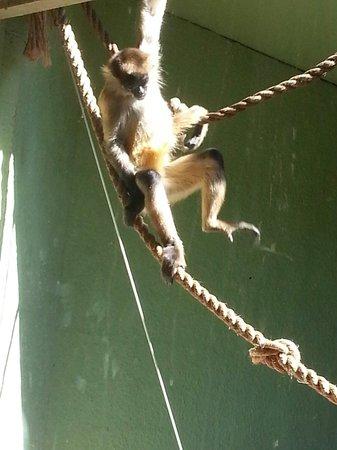 Birmingham Zoo: Awesome primate exhibit!