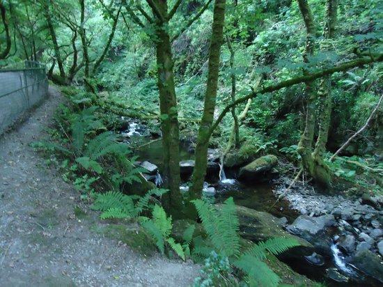 Torc Mountain Walk : Killarney