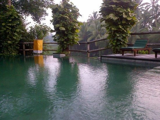 Villa Gaia : kolam renang dengan pemandangan sawah yang sangat bagus