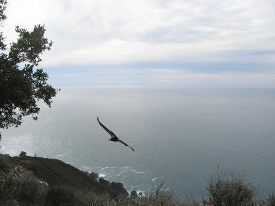Pfeiffer Big Sur State Park : California Condor