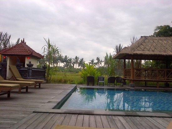 Suly Vegetarian Resort & Spa: anda bisa meminta satff hotel untuk mengambilkan beebrapa batang tebu yang tumbuh disekitar kola