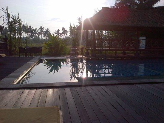 Suly Resort Yoga and Spa: berenang dengan menyatap tebu fresh langsung dari pinggir kolam