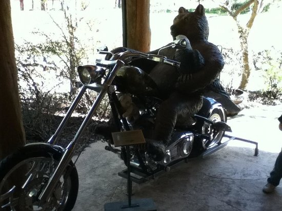 Wildlife Images - Rehabilitation & Education Center: In front of gift shop lol real Harley !!