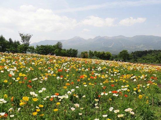 Nasu Flower World: 那須フラワーワールド  2013.6.9