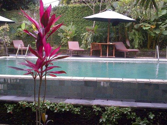 Ubud Bungalow: kolam yang bagus
