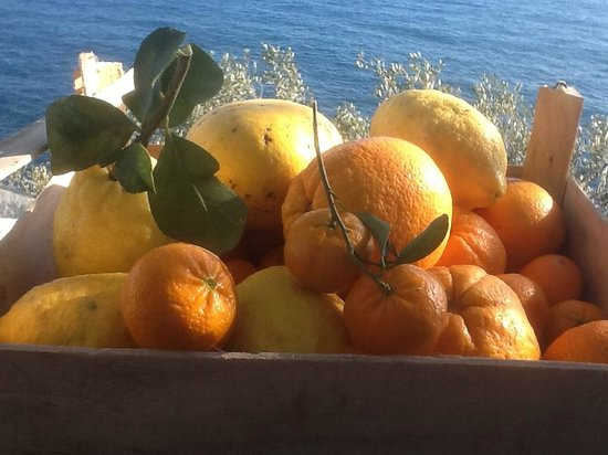 Punta Chiarito Resort Hotel Ristorante: The owner of the hotel showed his gardens an we picket our own fruitl.