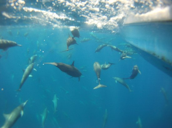 Drake Bay, Costa Rica: GOPRO photo taken while snorkeling and being pulled along the side of Sierra's boat.