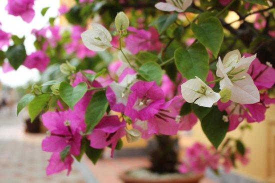 Victoria Hoi An Beach Resort & Spa: Flowers