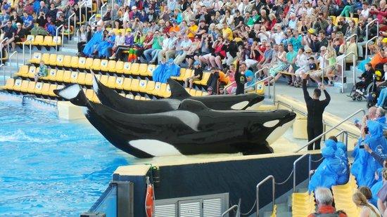 Loro Parque: Orca show