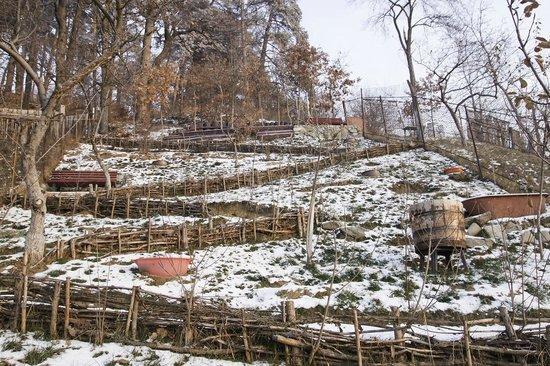Pensiunea Promenada: garden winter