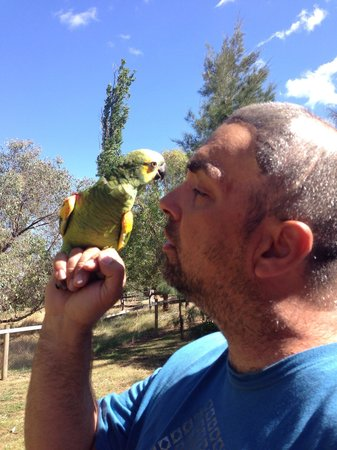 Baranduda Homestead B&B Cottages: Ollie our parrot enjoying the fresh air at lotties cottage