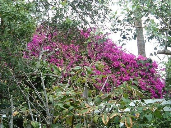 Jardín de Orquídeas de Sitio Litre: Bougainvillea (I think)