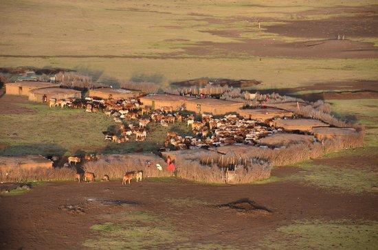 Fairmont Mara Safari Club : Maasai village and cow herd taken from hot air balloon