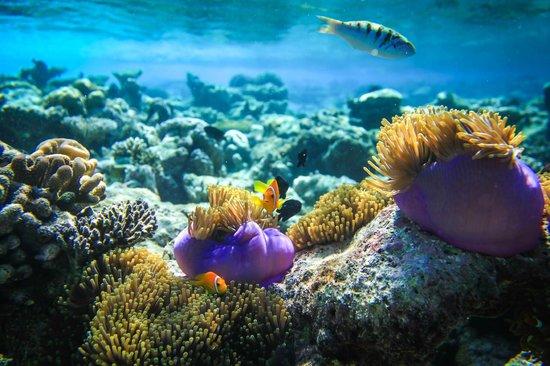 Biyaadhoo Island: подводный мир