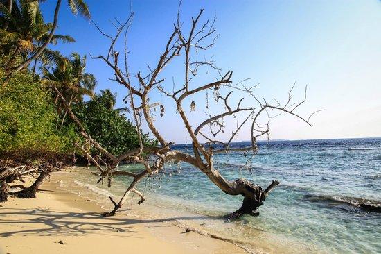 Biyadhoo Island Resort: тотемное дерево