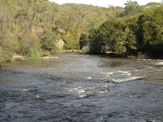 Yering Gorge Cottages: The Yarra River along the bush walks from the cottages