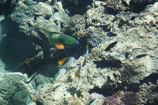 SENTIDO Mamlouk Palace Resort : рифы